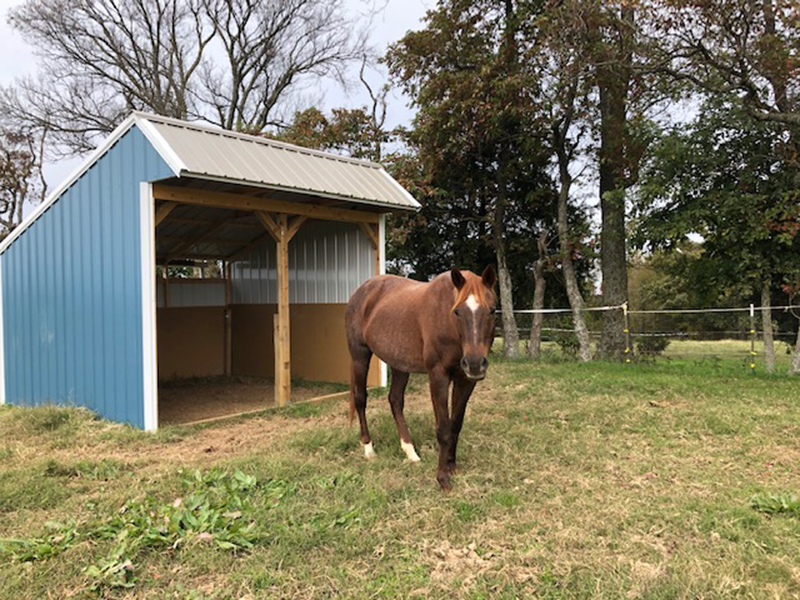horse sheds with custom options for sale in madison county arkansas