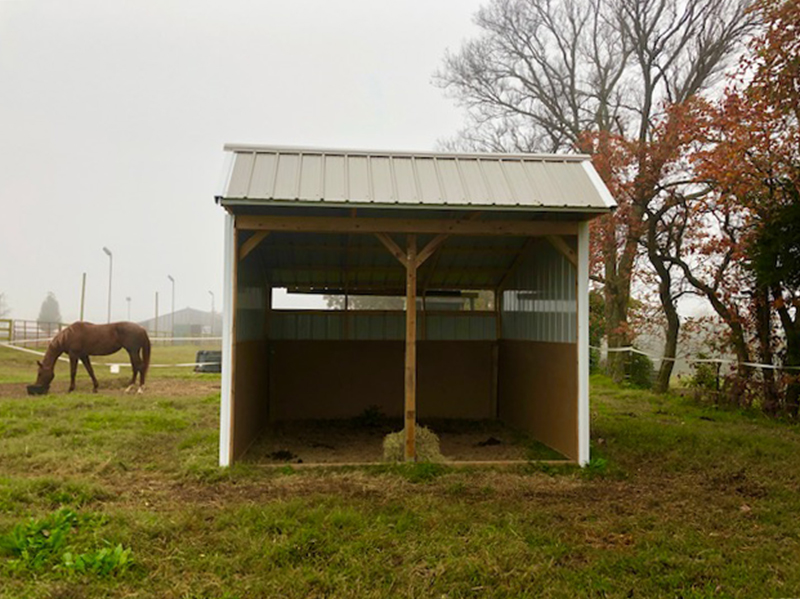 horse with horse sheds for sale